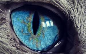 focus=85x85/zoom=2 result